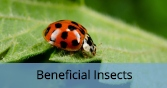 BeneficialInsects_Final