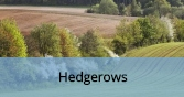 Hedgerows_Final