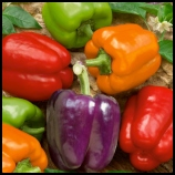Bell Peppers_Final